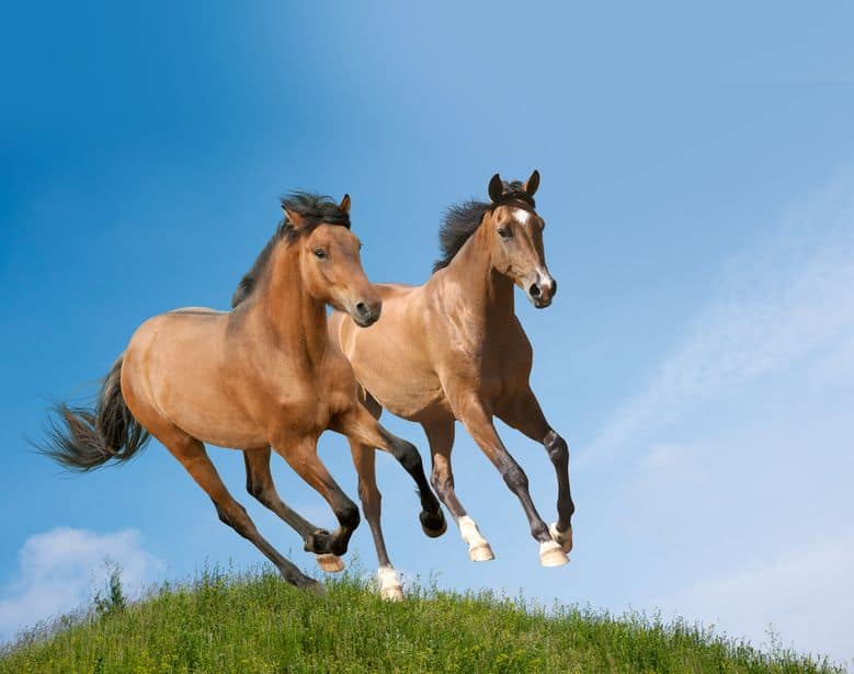 Reico Pferdefutter