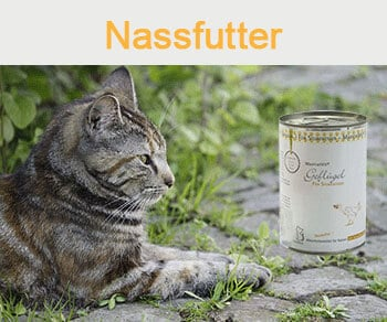 Dies ist ein Bild von einer Katze mit einer Reico Katzenfutter Dose