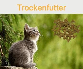 Dies ist ein Bild von einer Katze mit Blick auf das Reico Katzenfutter Trockenfutter