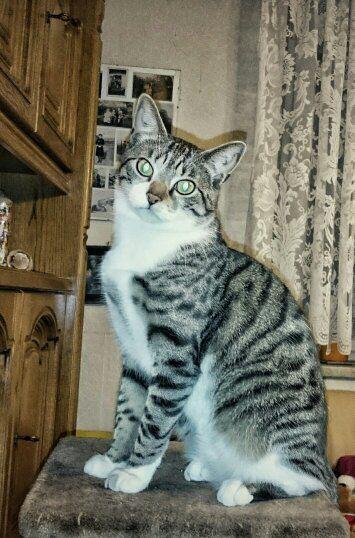 Eine Katze die sehr gerne das Reico Katzenfutter frisst